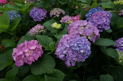 Flowers, Purple, See Flowers, Blue, Garden