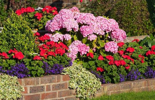 Wall Flowers, Flowers, Geraniums, Hydrangeas, Hydrangea