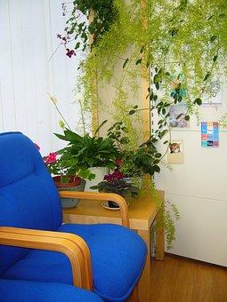 Waiting Area, Blue Chair, Indoor Plants