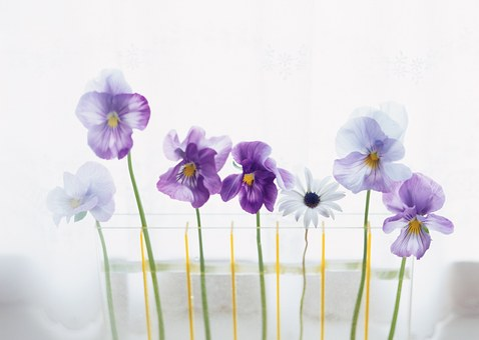 See Flowers, Interior, Hwasaham