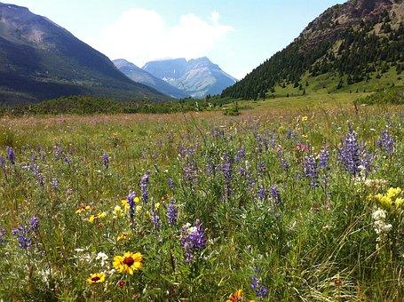 Wildflowers, Mountains, Glorious Wildflower, Flower