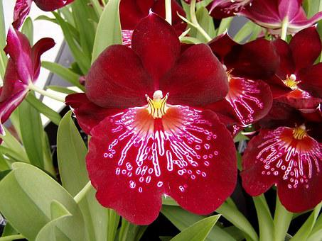 Orchid, Flower, Spring, Blossom, Plant, Petals, Nature