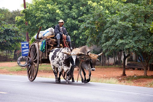 Oxcart, Paraguayans, Road, Tree, Paraguay