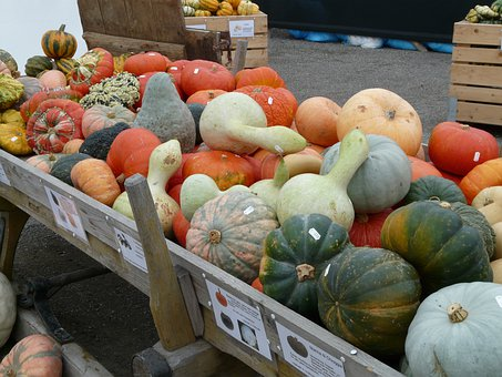 Kür Bite Varieties, Pumpkins, Pumpkin Sale, Sale