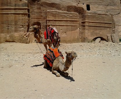 Camel, Pair, Colorful, Blanket, Saddle, Rock, Desert