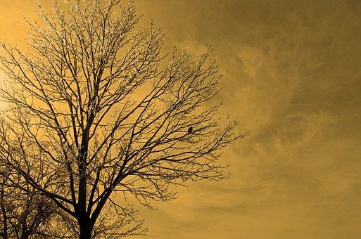 Frozen, Tree, Ice, Nature, Macro, Branch, Sky, Cloudy