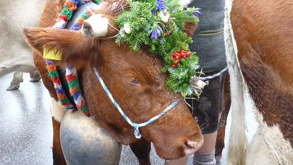 Allgau, Pfronten, Viehscheid, Cows, Tradition