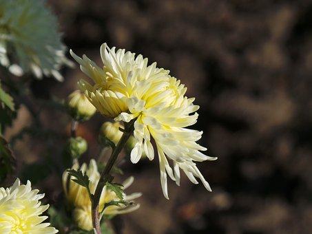 Flower, Beautiful Flower, Yellow, Nature, Macro