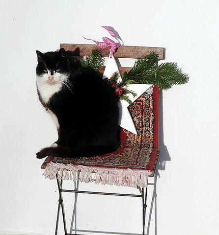 Cat, Chair, Decoration, Animal, Domestic Cat