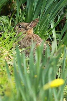 Animal, Bunny, Cute, Ears, Easter, Fluffy, Fur, Grass