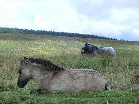 Dartmoor, England, United Kingdom, Devon, Landscape