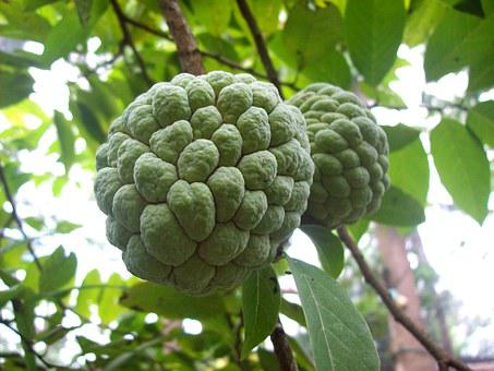 Fruits, Sugarapple, Sweetsop, Delicious