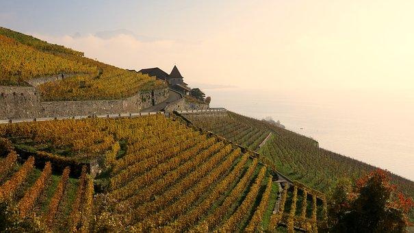 Lac Leman, Vineyards, Viticulture, Lavaux
