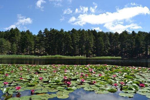 Lac, Corsica, Nature, Landscape, Creno