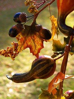 Decorative Gourd, Pumpkin, Squash, Curcurbit, Calabash