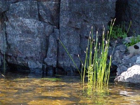 Rocky, Shore Line, Water, Plants, Grass, Rocks, Outside