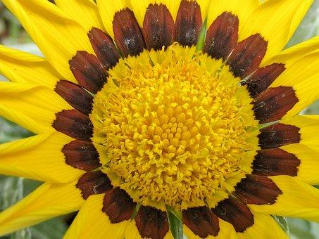 Flower, Flowers, Sunflower, Yellow, Brown, Nature