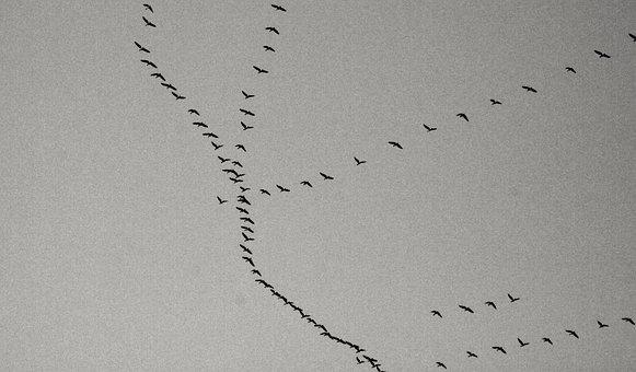 Birds, Cold, Dark, Ducks, Fall, Flock, Flying, Sky
