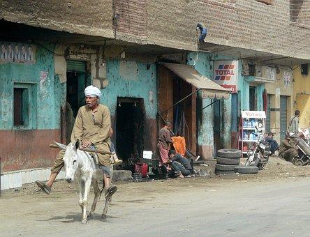 Gee Up, Moke, Ecology, Donkey, Dirty, City, Village