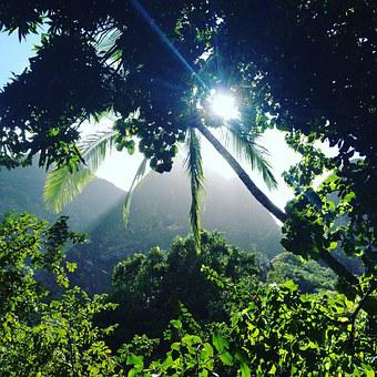 Iao Valley, Jungle, Forest, Maui