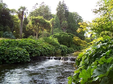 County Wicklow, Ireland, River, Bank, Plants, Trees