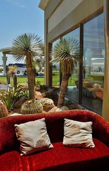 Window, The View From The Window, Sofa, Palm, Cactus