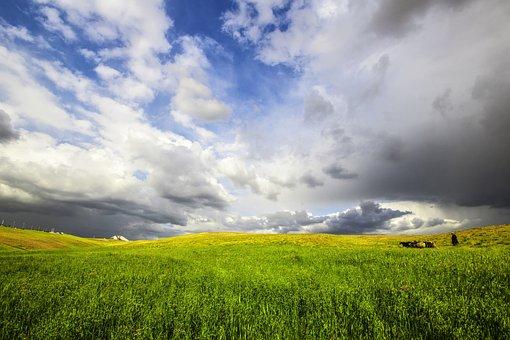 Landscape, Nature, Spring, Omar Alnahi