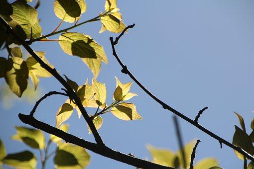 Tree, The Leaves, Sunshine, Plant, Beautiful