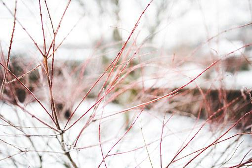 Branch, Branches, Winter, Snow, Close Up, Close-up