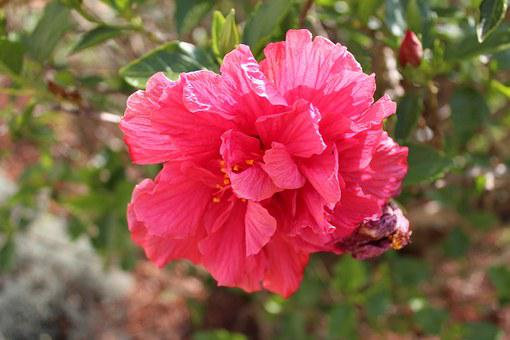 Flower, Plant, Pink, Beautiful, Flowers, Plants, Summer