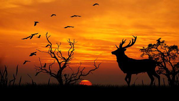 Sunset, Deer, Trestle, Birds, Photoshop, Graphics