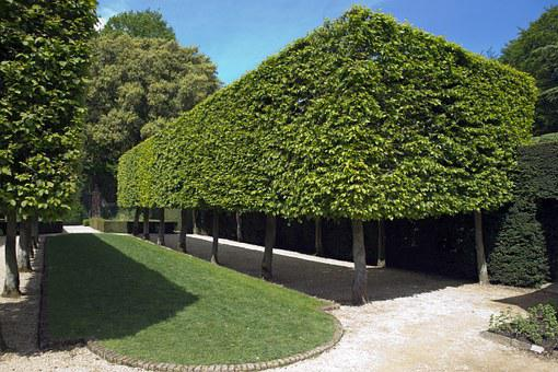 Hidcote Manor Garden, Pleached Hornbeam Trees, Box Form