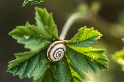 Vine Leaf, Snail, Nature Green, Cochlea, Animal, Plants