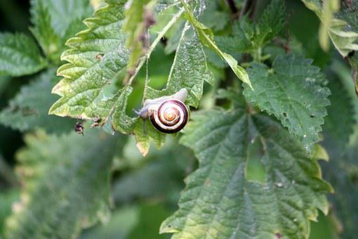 Snail, Animal, Green, Nature, Garden, Tree, Branch