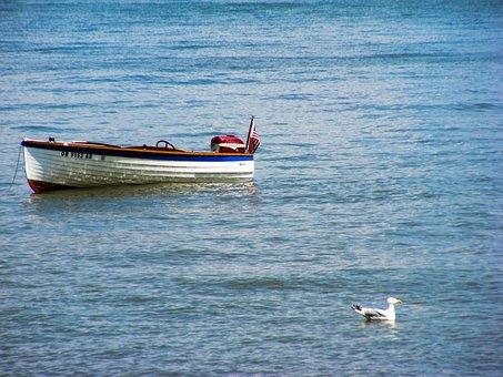 Water, Lake Erie, Boat, Lake, Seagull, Bird, Gull