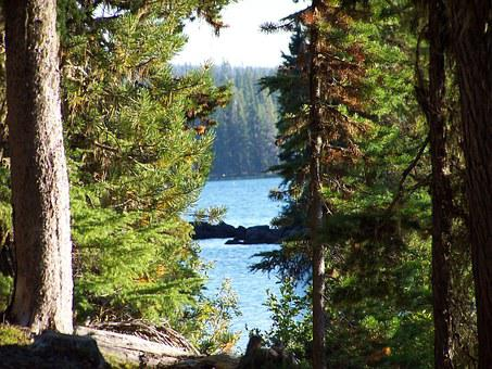 Waldo Lake, Lake, Trees, Beauty, Nature, Peaceful, Calm
