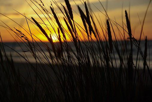 Midnight Sun, Sunset, Reeds, Sea