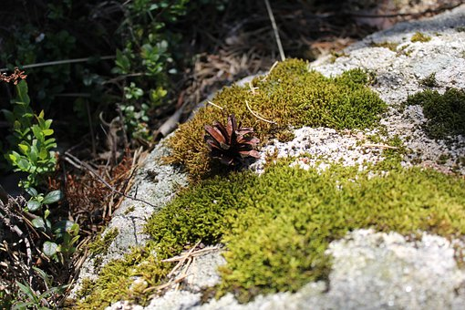 Moss, Forest Floor, Nature, Stone, Plant, Natural