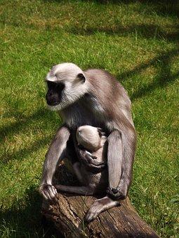 Monkey, Monkey Nut, Mother And Child, Zoo