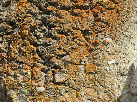 Rock, Lichen, Cliff, Mountain, Moss, Stone, Plant