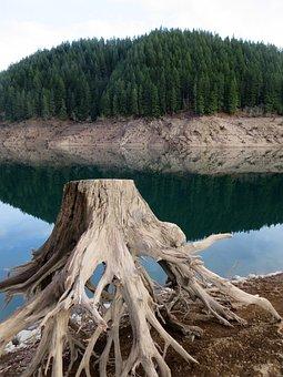 Lake, Drought, Oregon, Lake Detroit, Nature, Trees