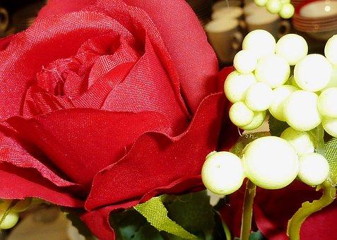 Rose, Red, Ste Rose, Flower, Blossom, Bloom
