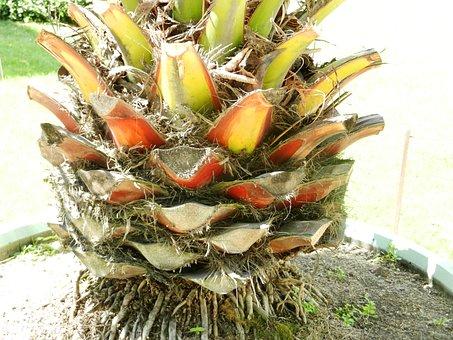 Closeup, Plant, Rhizome, Nature, Exotica, Detail Of