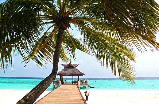Beach, Coconut Tree, White Sand, Sea, Summer, Shore