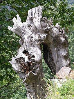 Nature, Trees, Chestnut, Tree Trunk, Rhizome