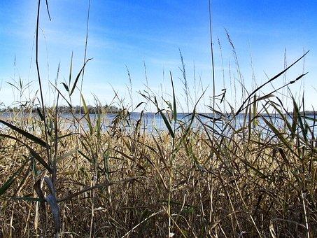 Grass, Lake, Sky, Landscape, Water, Outdoors, Cloud