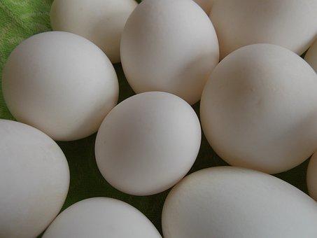 Eggs, Green, Shells, Duck Eggs, Easter, Nature