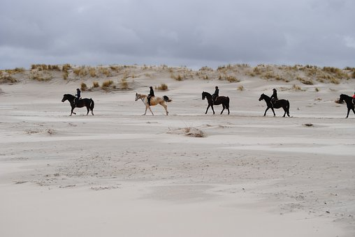 North Sea, Ride, Reiter, Horses, Spiekeroog, Island