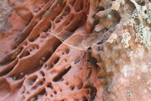 Alveolar Erosion, Sediments, Sandstone