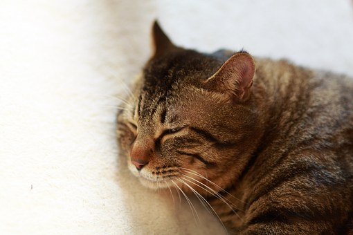 Cat, Her Sleeping Face, Animal, Cute, Sleep, Sleeping